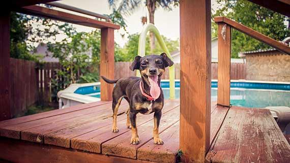 Backyard Pool Staycation