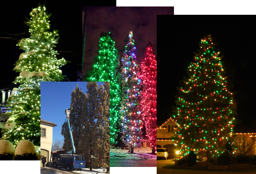 Large Outdoor Tree Lighting